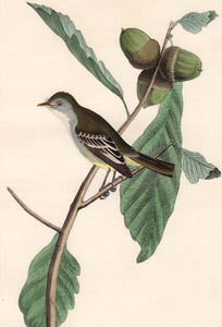 Audubon First Edition Octavo Print for sale Pl 66 Least Pewee Flycatcher, closer view