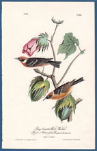 Load image into Gallery viewer, Audubon First Edition Octavo Print for sale Pl 80 Bay-Breasted Wood Warbler, full sheet