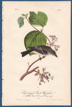 Load image into Gallery viewer, Audubon Octavo Print First Edition for sale Pl 61 Pewit Flycatcher, full sheet