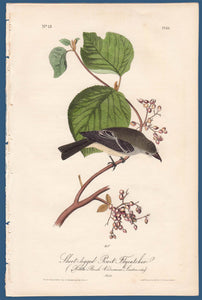 Audubon Octavo Print First Edition for sale Pl 61 Pewit Flycatcher, full sheet