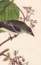 Load image into Gallery viewer, Audubon Octavo Print First Edition for sale Pl 61 Pewit Flycatcher, detail