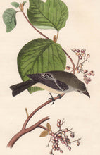 Load image into Gallery viewer, Audubon Octavo Print First Edition for sale Pl 61 Pewit Flycatcher, closer view