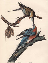 Load image into Gallery viewer, Audubon 1840 First Edition Royal Octavo Print 285 Passenger Pigeon, detail