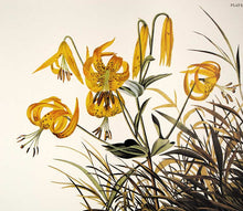 Load image into Gallery viewer, Audubon Princeton Print for sale Plate 186 Pinnated Grous, detail