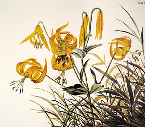 Audubon Princeton Print for sale Plate 186 Pinnated Grous, detail