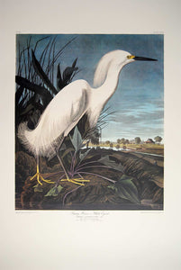 Audubon Princeton Prints for sale Pl 242 Snowy Heron or White Egret, full sheet view
