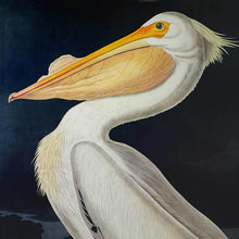 Load image into Gallery viewer, Audubon Princeton Print 311 White Pelican, detail