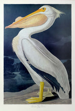Load image into Gallery viewer, Audubon Princeton Print 311 White Pelican, full sheet