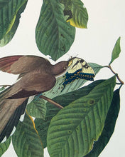Load image into Gallery viewer, Detail of Yellow-Billed Cuckoo by John J Audubon
