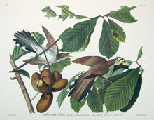 Load image into Gallery viewer, Plate 002 Yellow-Billed Cuckoo, Princeton Audubon Print