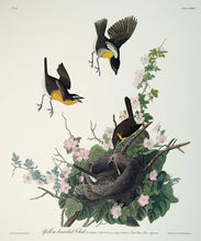 Load image into Gallery viewer, Detail of Yellow Breasted Chat print by John J Audubon