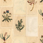 Botanical Collage - Native Wallpaper