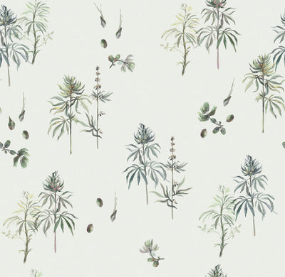 Botanical Weed - Baby's Breath Wallpaper