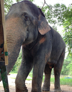 Make a Donation Directly For Elephant Care