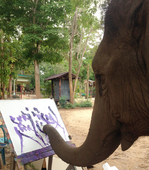 Do elephants like to Paint?  Are they trained?
