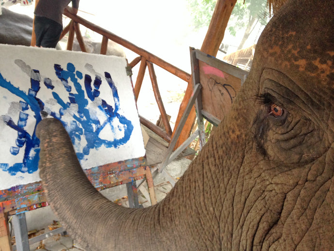 Are Paintings by Elephants Really Art?