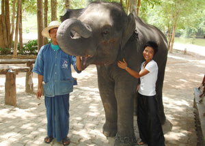 Elephant Somchai