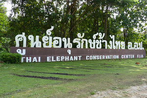 The Elephant Art Gallery and the Thai Elephant Conservation Center