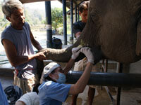 The Elephant Hospital & Mobile Clinic