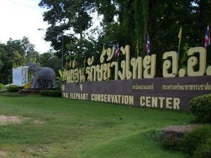The Great Work of The Thai Elephant Conservation Center/National Elephant Institute