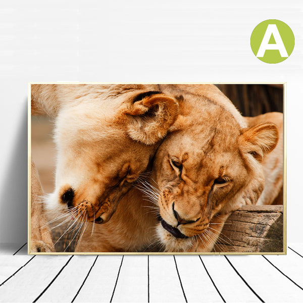 Love-Kiss-Between-Lions-Animals-Art-Canvas-Digital-Print-Wall-Poster