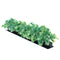 Luxury Parsley Garnish Black Base 6/box