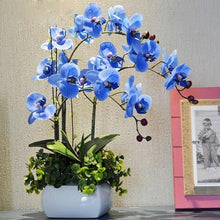 Load image into Gallery viewer, Ornamental Orchid Bonsai - 200 Seeds / Pack - HOT!