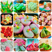 Load image into Gallery viewer, Rare Exotic Lithops - 300 Seeds / pack HOT! - Limited