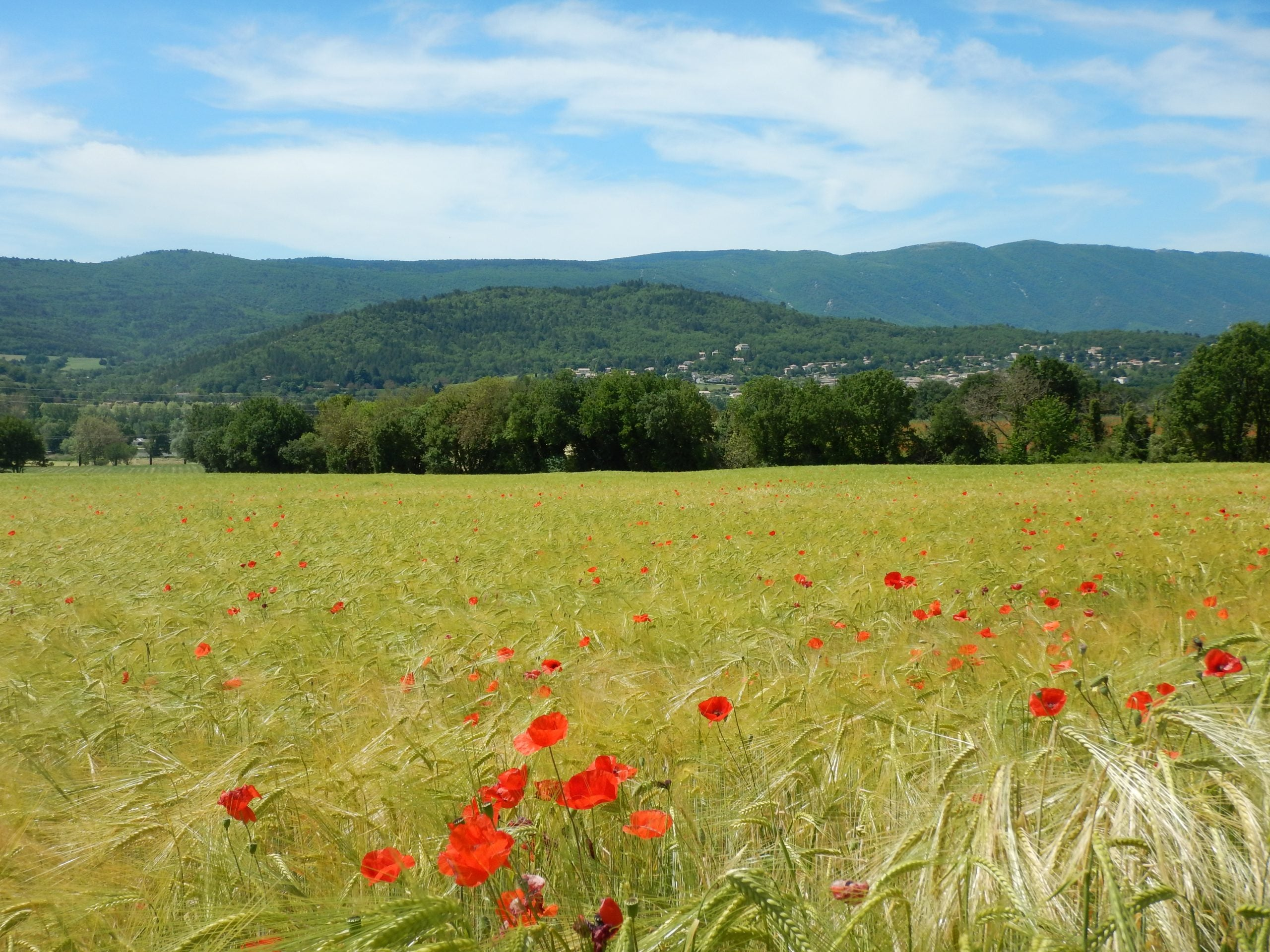 5 Mistakes From My First Self-Supported Bike Tour - Poppy Field in France
