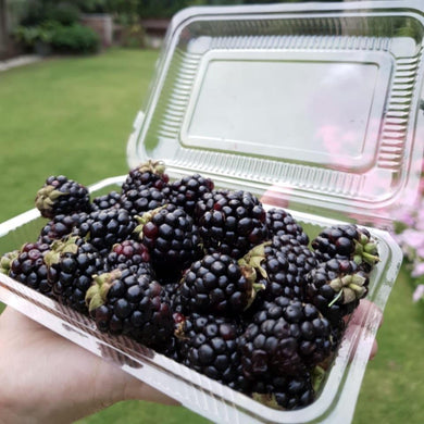 Fresh Blackberries Local 150g - TAYYIB - Tayyib Foods - Lahore