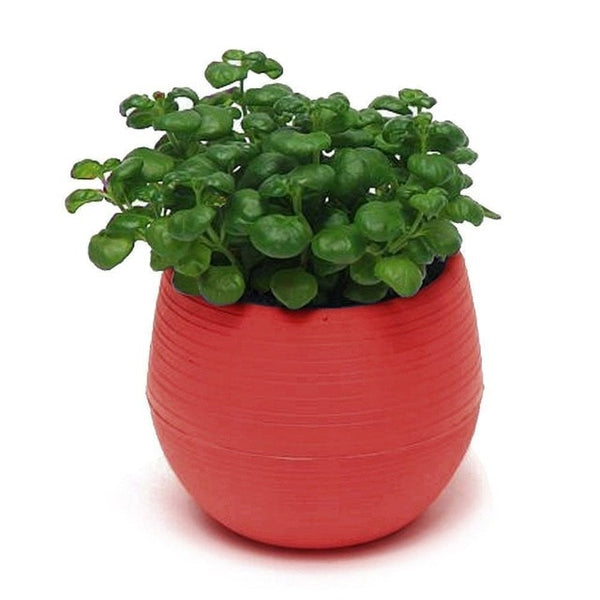 Red Mini Colourful Plastic Pot