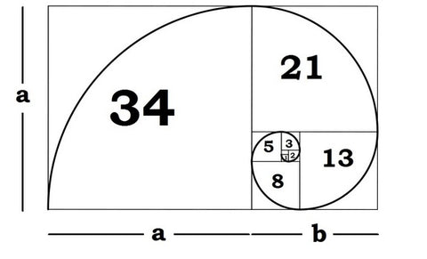 What Is the Golden Ratio? | Barbara Michelle Jacobs Blog