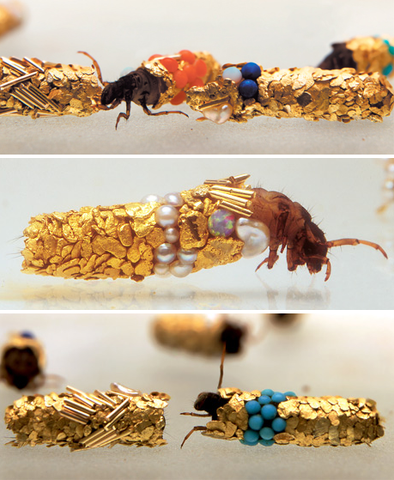 caddis fly, jewelry made by bugs