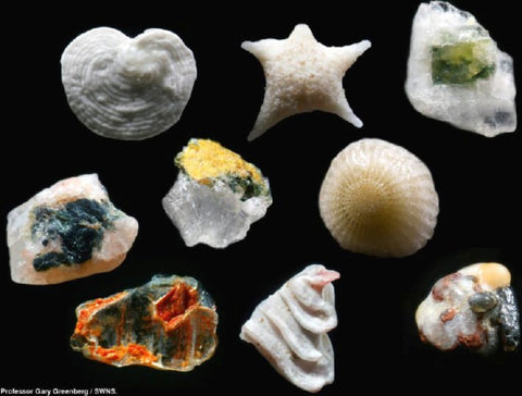 Hidden Jewels: Magnified Grains of Sand | BMJ Blog