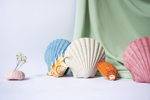 Sea Shell - Art Object