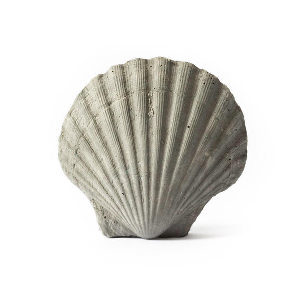 Sea Shell - Studio Emma