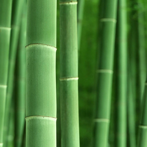 15 fun facts about bamboo