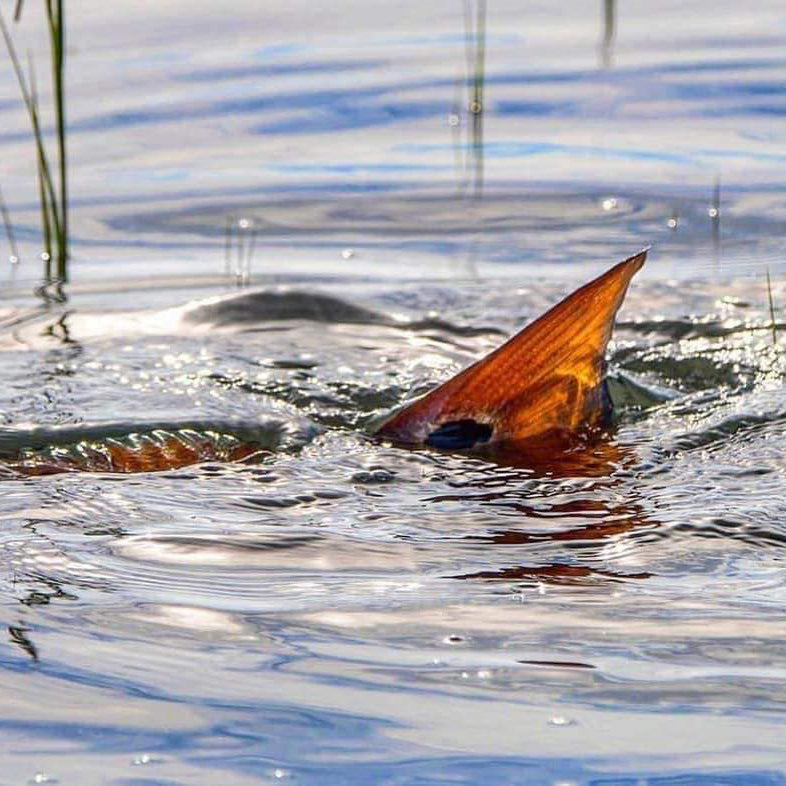 Event #4 - Big Redfish Side Pot: September 14, 2019