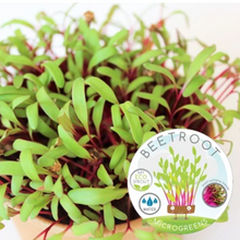 My Eco Sprout - Beetroot Sprouts