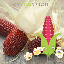 My Eco Sprout Strawberry Popcorn