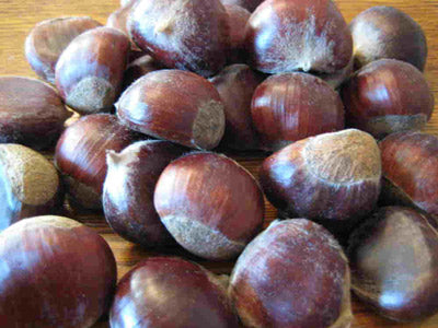 Chestnuts ready to be peeled, roasted, and eaten