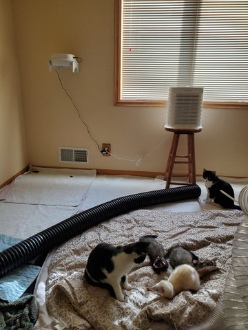 Purrified Air filter with ferrets and cats