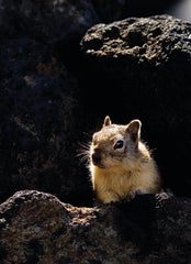 Craters of the Moon is home to the...Squirrel