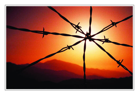 Twisted Barbed Wire