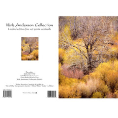 OLD COTTONWOOD AND WILLOWS #50