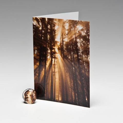 SUN RAY MAGNET CARDS