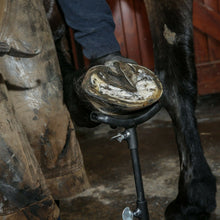 "Load image into Gallery viewer, Farriers Equipment Tools Hoof Stand | adj height 15""-25"" 