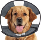 Procone Soft Recovery Collar