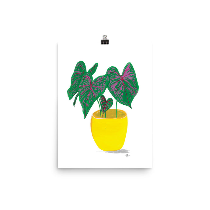 Potted Calathea - Art Print
