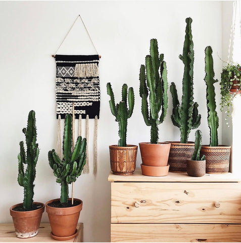 Shop Boho Plants & Cacti